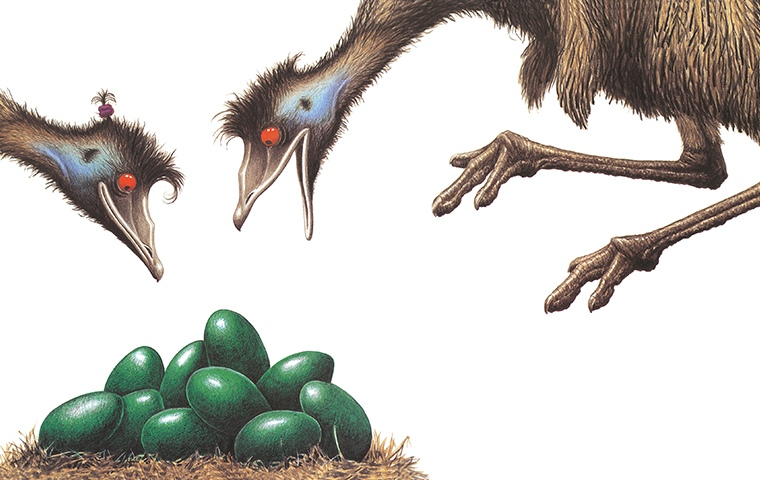 two emus looking at a pile of green emu eggs