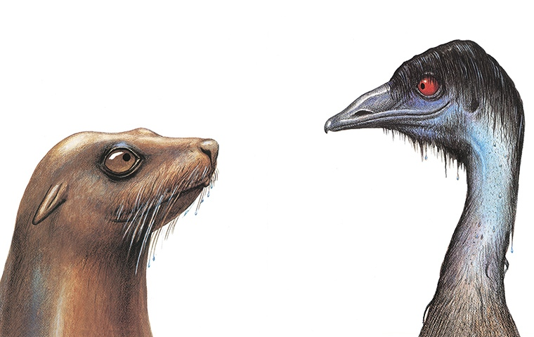 a seal and an emu looking at each other
