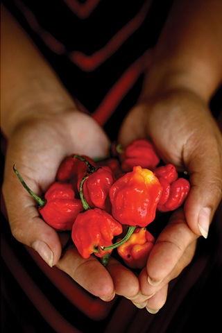 hands holding orange red chillies